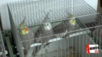 bourse oiseaux