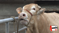 SIA agriculture élevage Arsicaud