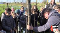 Taugon arbres plantation jeunes