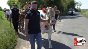 Saint Sauveur d'Aunis. Fête de la Transhumance : plus de 2000 personnes, oh la vache !