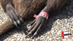 A La Laigne, Bernard, militant anti-bassines, a reçu un cadavre de ragondin aux couleurs de TF1