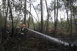 Feu de forêt à Bussac en Charente-Maritime : 2 hectares partent en fumée