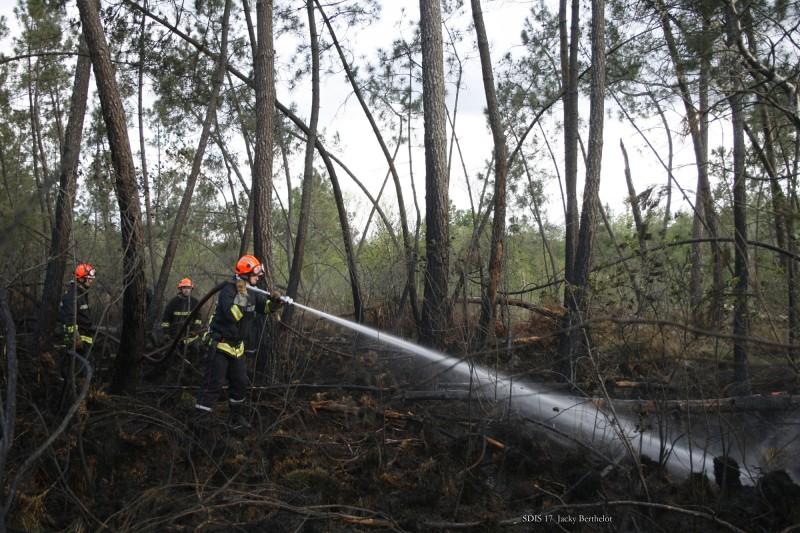 Feu de forêt résineux Bussac Forêt SDIS 17 Jacky Berthelot