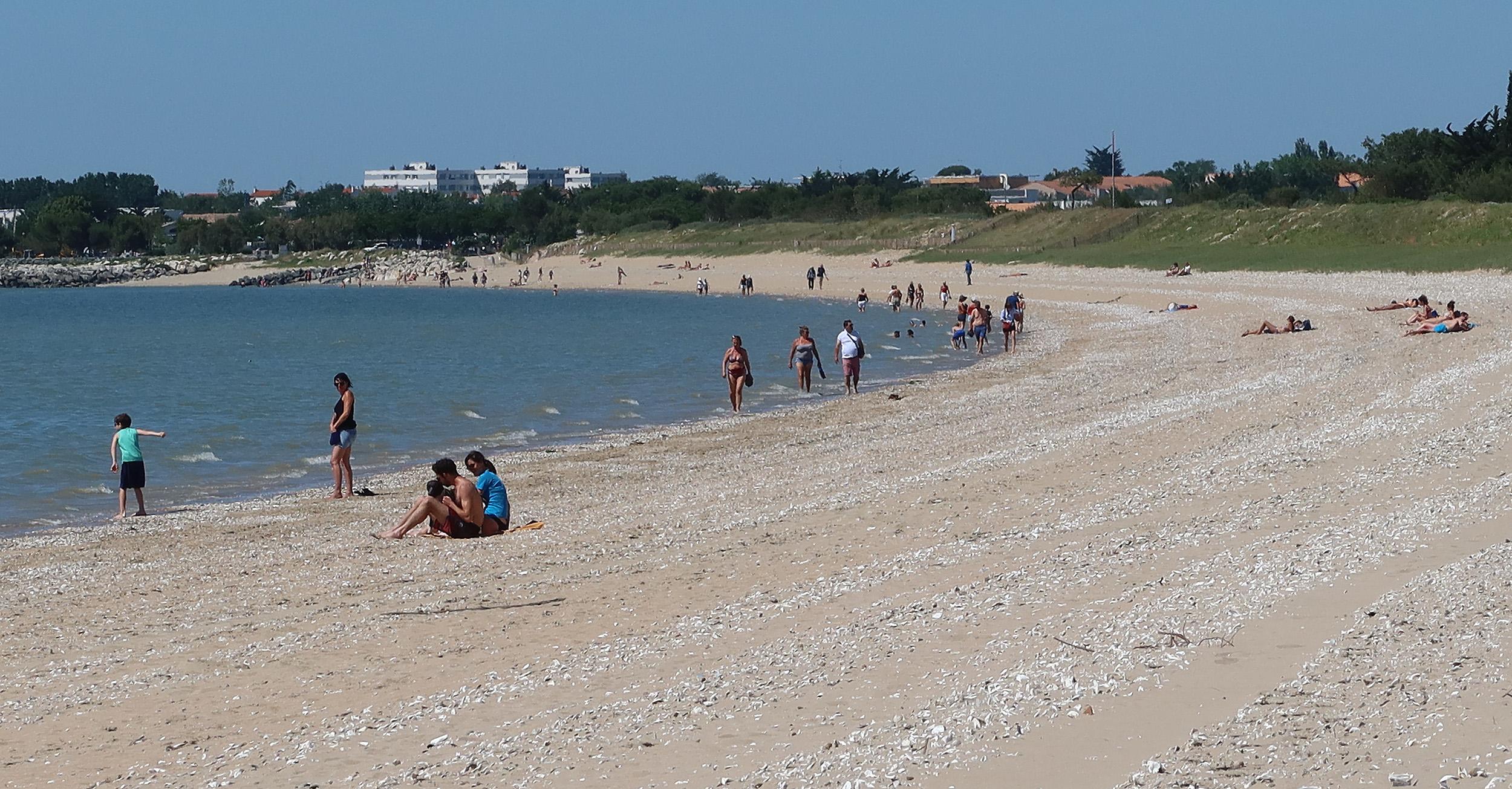 Sur la plage d'Aytré certains n'ont pas encore compris la réglementation.