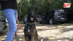 Concours La Rochelle mordant sportif chien