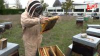 Julien Dosnon Apiculteur Ferme apicole La Rochelle