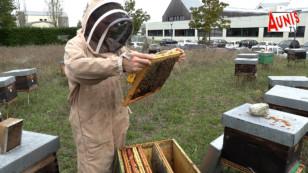 Périgny : une ferme apicole écologique et pédagogique sur la commune pour 2021