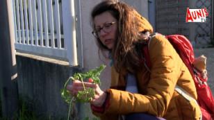 La Rochelle : une association vous apprend à identifier et consommer les plantes sauvages