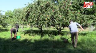Taugon : les Croqueurs de pommes, ces experts en Malus Pumila