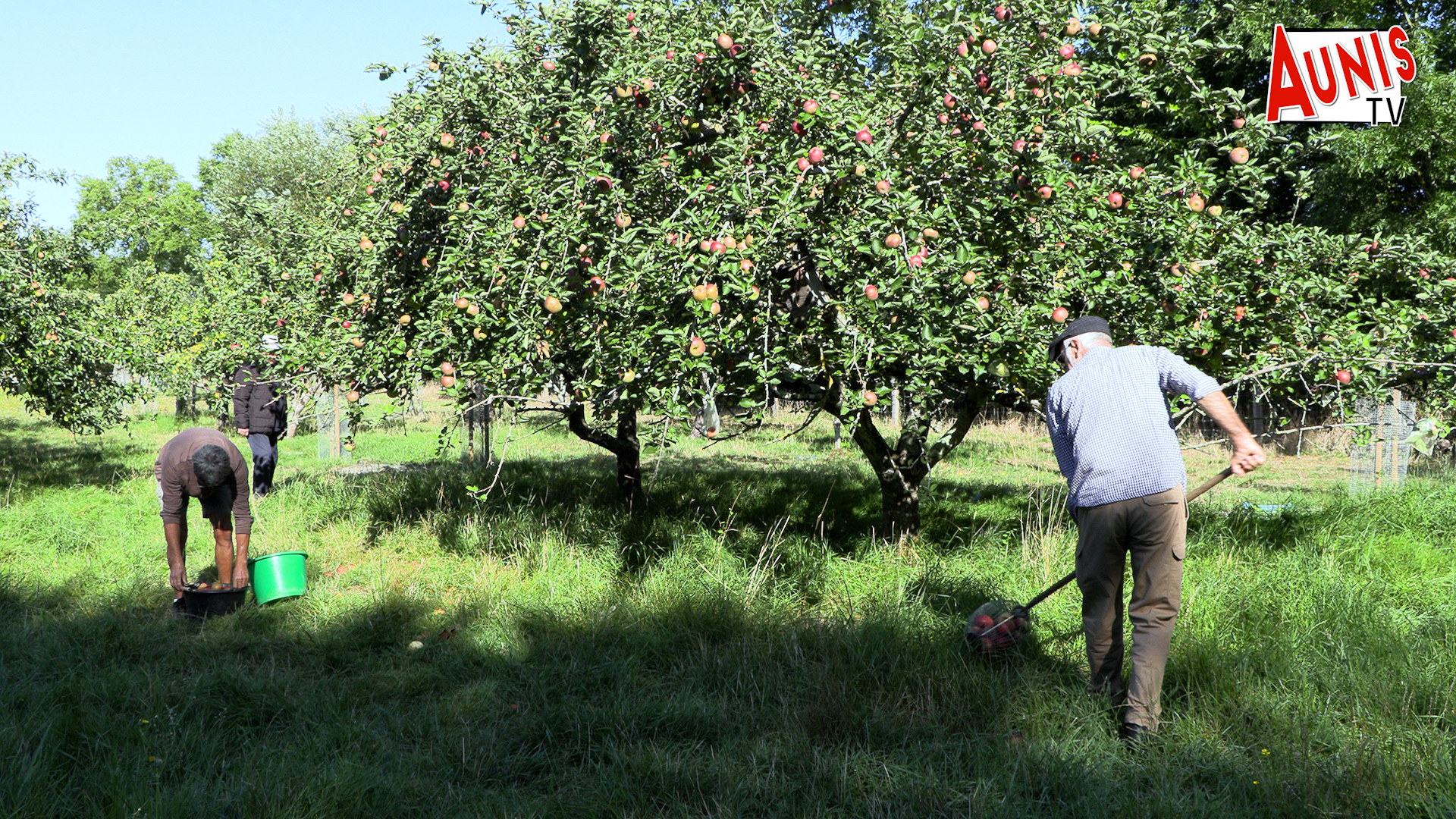 Croqueurs de pomme verger Taugon